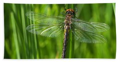 Dragonfly On Grass Hand Towel by Sharon Talson