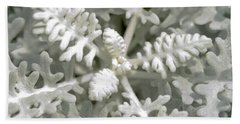 Dusty Miller Jacobaea Maritima Silver Ragwort Hand Towel