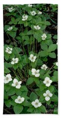 Hand Towel featuring the photograph Dwarf Dogwood by Doug Herr