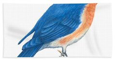 Eastern Bluebird Hand Towel by Anonymous