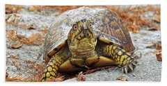 Bath Towel featuring the photograph Eastern Box Turtle by Cynthia Guinn