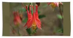 Wild Columbine Hand Towel by William Tanneberger