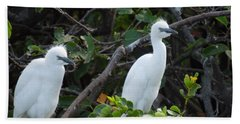 Egret Chicks Waiting To Be Fed Bath Towel