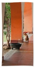 Hand Towel featuring the photograph El Gato by Marcia Socolik