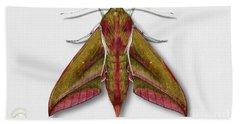 Elephant Hawk Moth Butterfly - Deilephila Elpenor Naturalistic Painting - Nettersheim Eifel Hand Towel
