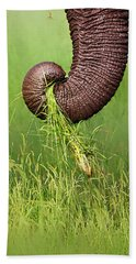 Elephant Trunk Pulling Grass Hand Towel