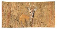 European Roe Deer Hand Towel