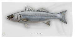 European Seabass Dicentrarchus Labrax - Bar Commun - Loup De Mer - Lubina - Havabor - Seafood Art Hand Towel