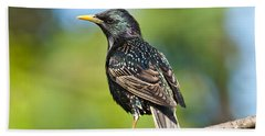 European Starling In A Tree Hand Towel
