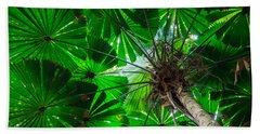 Fan Palm Tree Of The Rainforest Hand Towel
