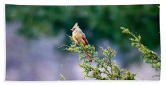 Female Cardinal In Snow Hand Towel by Eleanor Abramson