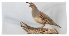 Female Gambel's Quail Hand Towel