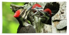 Female Pileated Woodpecker At Nest Hand Towel by Mircea Costina Photography