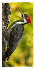 Female Pileated Woodpecker No. 2 Bath Towel