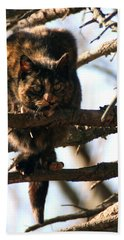 Feral Cat In Pine Tree Hand Towel