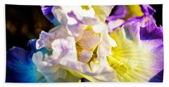 Fickle Iris  Hand Towel by Mary Ward