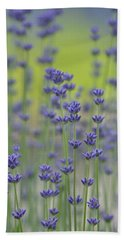 Field Of Lavender Flowers Hand Towel