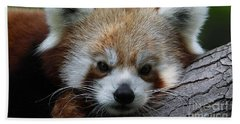 Bath Towel featuring the photograph Fire Fox by Judy Whitton