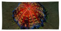 Bath Towel featuring the photograph Fire Sea Urchin by Sergey Lukashin