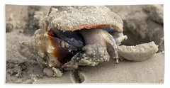 Hand Towel featuring the photograph Florida Fighting Conch by Meg Rousher