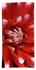 Flower- Dahlia-red-white Hand Towel