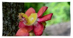 Flower Of Cannonball Tree Singapore Hand Towel