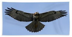 Flying Free - Red-tailed Hawk Hand Towel by Meg Rousher