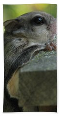Flying Squirrel Hand Towel