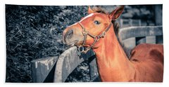 Foal By The Fence Hand Towel