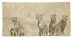 Four Cheetah Cubs Acinonyx Jubatus Bath Towel