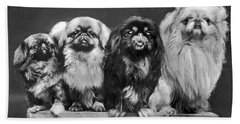 Four Pekingese On A Box Hand Towel