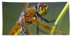 Four Spotted Chaser Bath Towel
