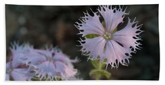 Bath Towel featuring the photograph Fringed Catchfly by Paul Rebmann
