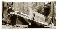 Bath Towel featuring the photograph Fun With Cats Henry King Nourse Photographer Circa 1900 by California Views Mr Pat Hathaway Archives