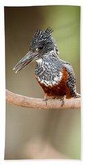 Giant Kingfisher Megaceryle Maxima Hand Towel by Panoramic Images