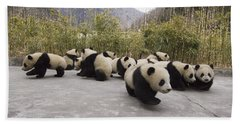Giant Panda Cubs Wolong China Hand Towel by Katherine Feng
