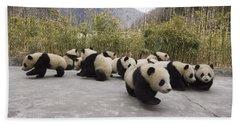 Giant Panda Cubs Wolong China Hand Towel