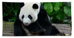 Giant Panda With Tongue Touching Nose At River Safari Zoo Singapore Bath Towel
