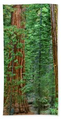 Giant Sequoias Sequoiadendron Gigantium Yosemite Np Ca Hand Towel by Dave Welling