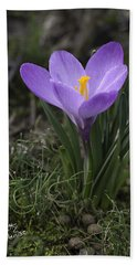 Bath Towel featuring the photograph Glorious Crocus by Betty Denise