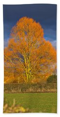 Bath Towel featuring the photograph Golden Glow - Sunlit Tree by Paul Gulliver