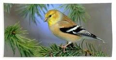 Goldfinch In A Fir Tree Bath Towel