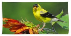 Bath Towel featuring the photograph Goldfinch Pose by Dianne Cowen