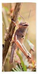 Grasshopper In The Marsh Hand Towel