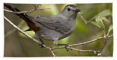 Hand Towel featuring the photograph Gray Catbird by Meg Rousher