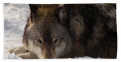 Gray Wolf In Snow Hand Towel