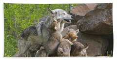 Gray Wolf With Cubs, Canis Lupus Hand Towel