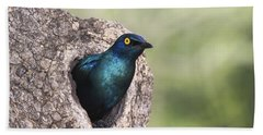Greater Blue-eared Glossy-starling Hand Towel by Andrew Schoeman