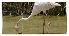 Greater Flamingo Feeding Bath Towel