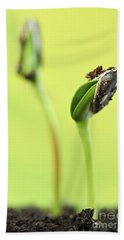 Green Sprouts Hand Towel